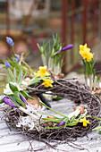 Kranz mit Traubenhyazinthen, Hyazinthe, Narzisse, Krokus und Milchstern auf dem Gartentisch