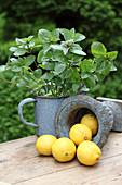 Lemons and mint in enamel pots on a garden table