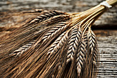 Ears of black emmer wheat
