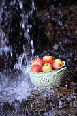 Apples in an enamel sieve under a natural water source