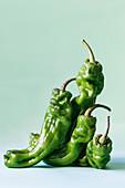 Grüne Jalapeno-Chilischoten