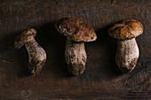 Frische Steinpilze auf Holztisch