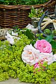 Zutaten für Sommerkranz: Frauenmantel, Rosen