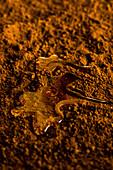 Karamellsauce auf Kakaopulver