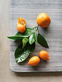 Mandarins and mandarinquats with leaves