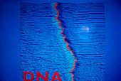 DNA molecule, STM