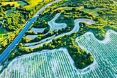 Vineyard, aerial view