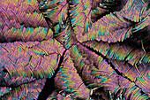 Nicotinic acid, polarised light micrograph