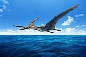 Pteranodon pterosaur, illustration
