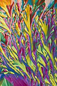 Ammonium iron sulfates, polarised light micrograph