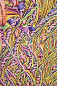 Skin cream, polarised light micrograph