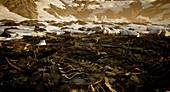 Ordovician–Silurian mass extinction, illustration