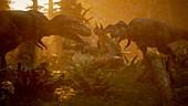 T-rex hunting triceratops, illustration