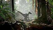 Dromaeosaurus dinosaur, illustration