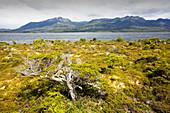 Peat bog, Patagonia, Chile
