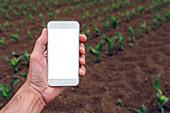 Smartphone screen in corn field