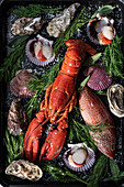 Gekochter Hummer, verschiedene Muscheln, Fisch und Kräuter