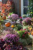 Herbstbeet mit Chrysantheme, Purpurglöckchen, Strauchveronika Magicolors 'Heartbreaker' und Heiligenkraut