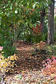 Buntes Herbstlaub auf schattigem Weg zwischen Bäumen