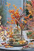 Sträuße aus Zweigen vom Baumwürger mit leuchtenden Früchten und Chinaschilf