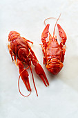 Raw red crayfish on white background