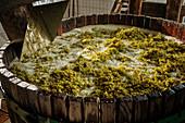 Weinherstellung: Weißweintrauben in Holzbottich