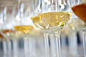 Glasses of white wine, Salem Palace, Markgraf vineyard, Bodensee, Baden, Germany