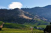 Vineyard landscape, Heitz Cellars Trailside, Napa Valley, California, USA
