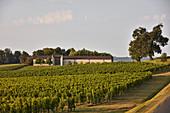 Rebgarten, Weingut Chateau Cap de Faugeress, Bordeaux, Frankreich