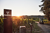 Weinlandschaft, Weingut Château Cap de Faugeress, Bordeaux, Frankreich