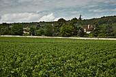 Weinlandschaft, Domaine Dujac, Burgund, Frankreich