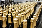 Champagne bottles, Feuillatte, Champagne, France