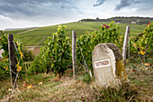 A vineyard with a boudary stone, Taittinger, Champagne, France