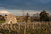 Vineyard landscape, Chateau Ausone, Saint-Emilion, Bordeaux, France