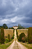 Rebhänge, Château de Chambert, Cahors, Frankreich