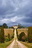 Rebhänge, Chateau de Chambert, Cahors, Frankreich