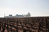 Vineyard landscape, Chateau Haut Brion, Pessac-Leognan, Bordeaux, France