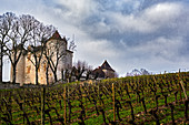 Vines, Chateau Lagrezette, Cahors, France