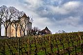 Vines, Chateau Lagrezette, Cahors, France