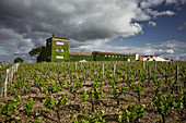Main building and vines, Chateau Rieussec, Sauternes, Bordeaux, France