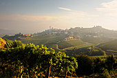 Vineyard landscape belonging to the Gaja vineyard, Piedmont, Italy