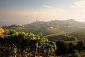 Weinlandschaft vom Weingut Gaja, Langhe, Piemont, Italien