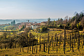 Vineyard landscape and Le Pianelle vineyard, Piedmont, Italy