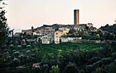 Le Pupille in Castiglione della Pescaia vineyard, Maremma, Tuscany, Italy