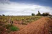 Vineyard landscape and Binigrau vineyard, Majorca, Spain