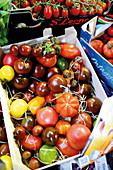 Verschiedene Tomaten in Steige