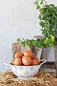 Brown chicken eggs in white colander on straw