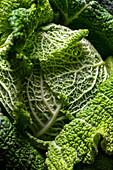 Macro detail of green cabbage