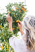 Woman growing kumquats