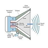 Moving coil loudspeaker, diagram